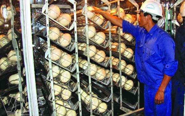 Инкубаторы для страусиных своими руками